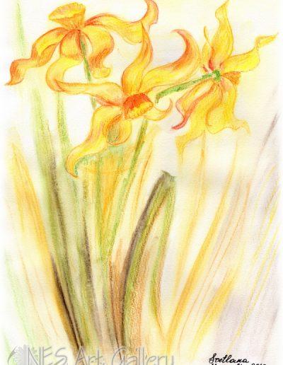 Gold Daffodil